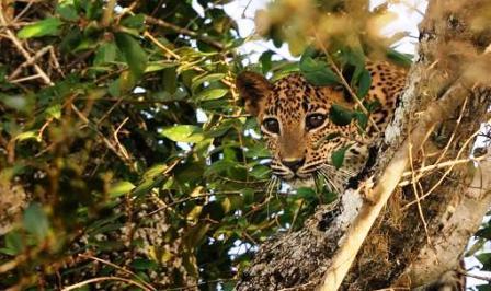 Machiya Safari Park