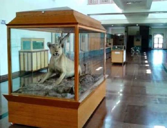 Inside Rajiv Gandhi Museum, Sawai Madhopur